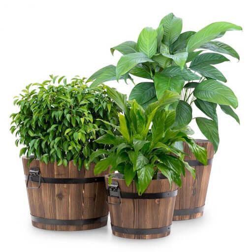 Blumfeldt Trifloris Ensemble de 3 pots pour jardin & terrasse  - bois de sapin m